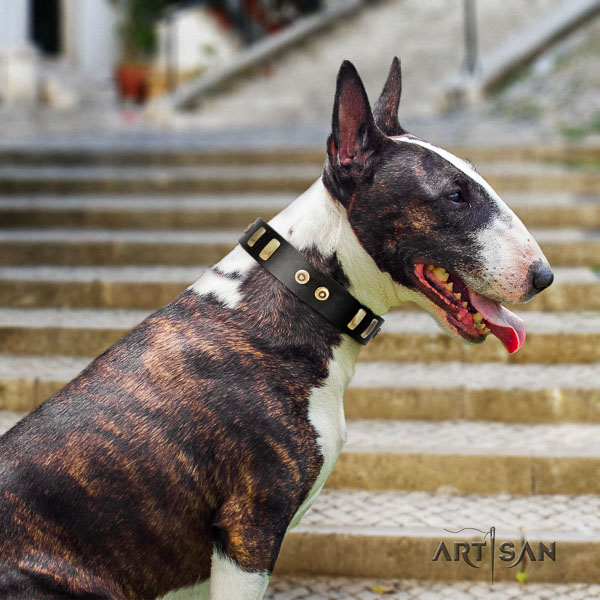 Bull Terrier everyday walking dog collar of awesome quality genuine leather