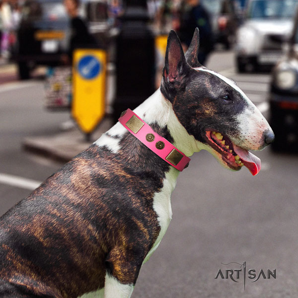 Bull Terrier handcrafted genuine leather dog collar with embellishments