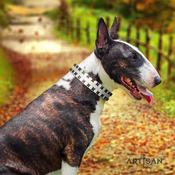 Bull Terrier fashionable full grain natural leather dog collar with decorations