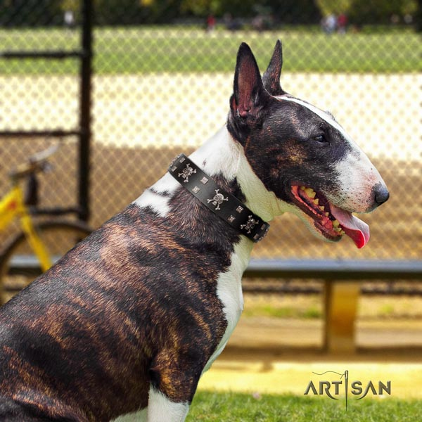 Bull Terrier comfortable wearing dog collar of soft genuine leather