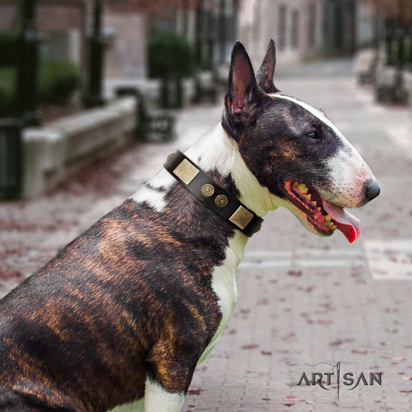 Bull Terrier stylish leather dog collar with adornments