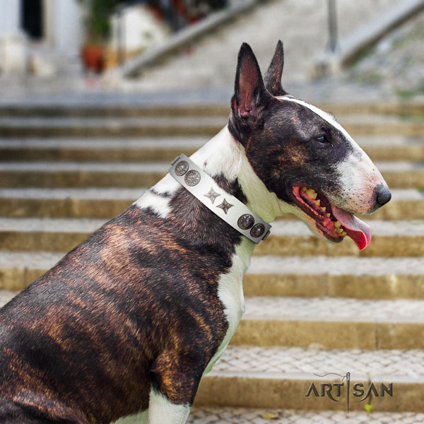 Bull Terrier walking dog collar of exceptional quality leather
