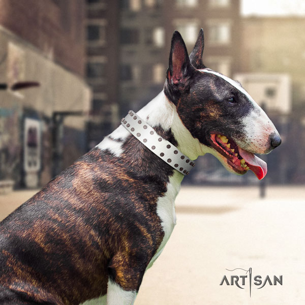 Bull Terrier daily use dog collar of trendy natural leather