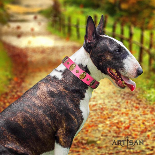 Bull Terrier convenient full grain leather dog collar with adornments