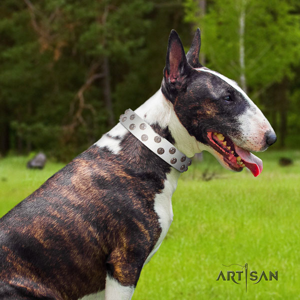 Bull Terrier walking dog collar of awesome quality leather