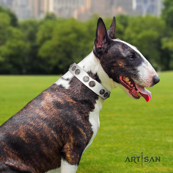 Bull Terrier everyday walking dog collar of exquisite quality natural leather
