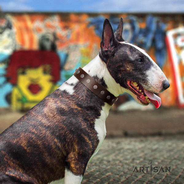 Bull Terrier comfy wearing dog collar of soft leather