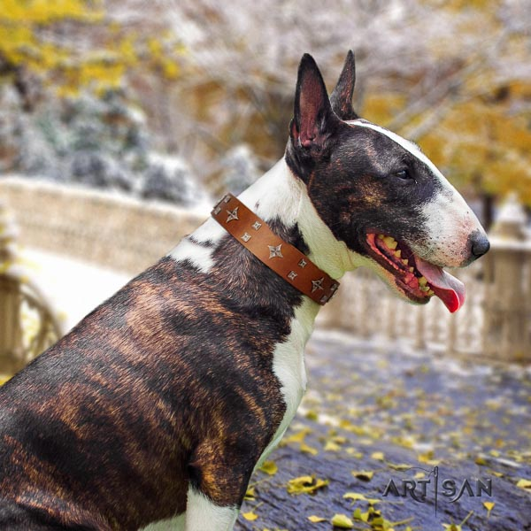 Bull Terrier fancy walking dog collar of extraordinary quality natural leather