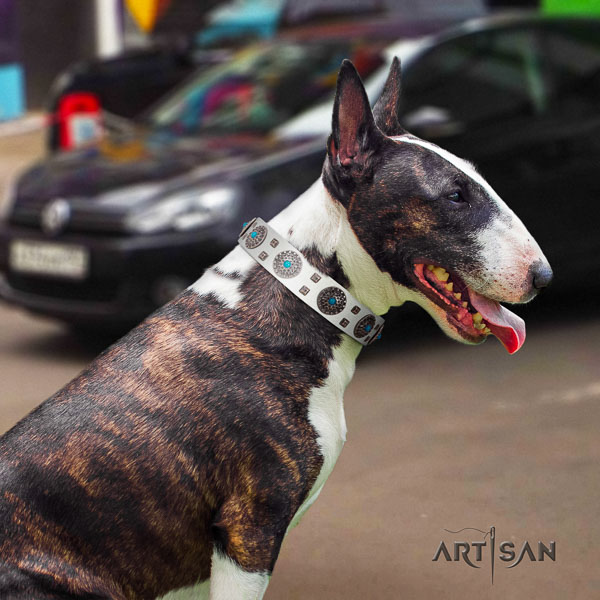 Bull Terrier daily walking dog collar of exceptional quality genuine leather