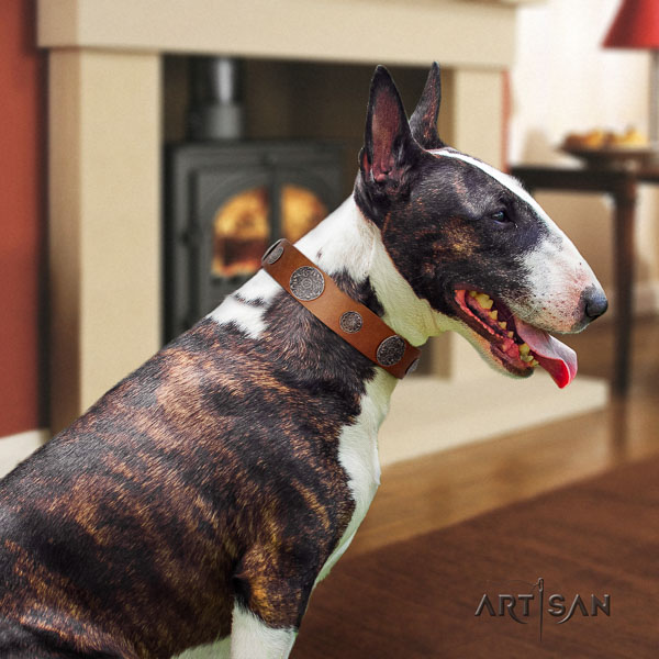 Bull Terrier comfortable wearing dog collar of extraordinary quality genuine leather