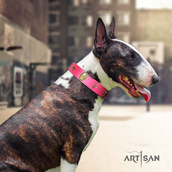 Bull Terrier comfortable wearing dog collar of trendy natural leather