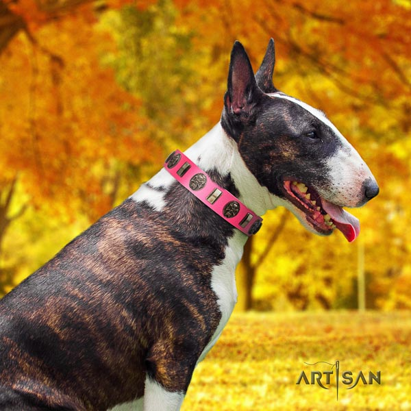 Bull Terrier best quality full grain natural leather dog collar with embellishments