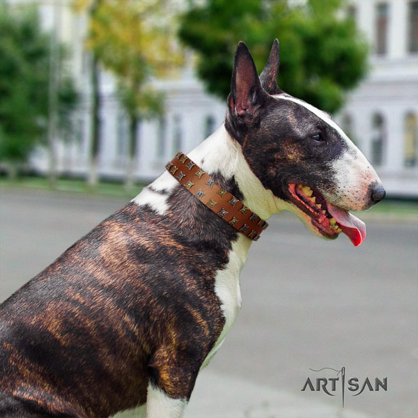 Bull Terrier unique full grain genuine leather dog collar with adornments