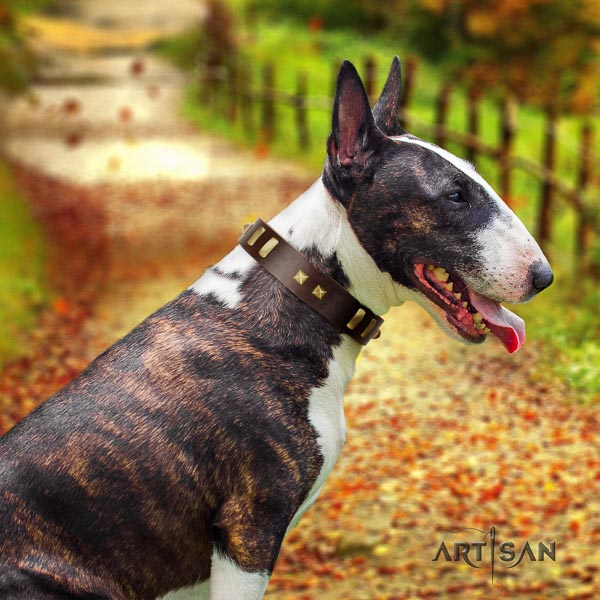 Bull Terrier comfy wearing dog collar of best quality leather