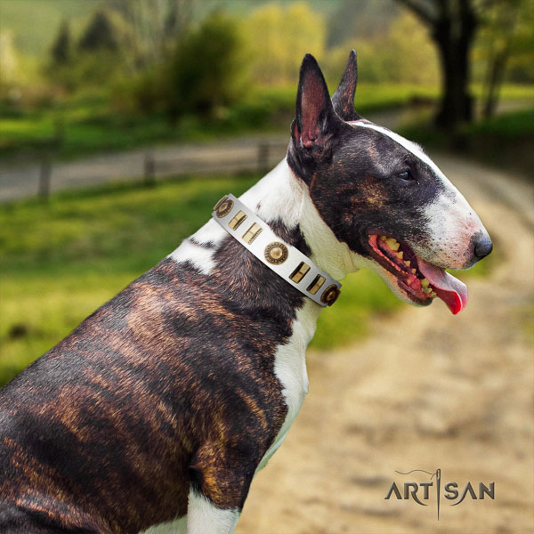 Bull Terrier top quality full grain natural leather dog collar with embellishments