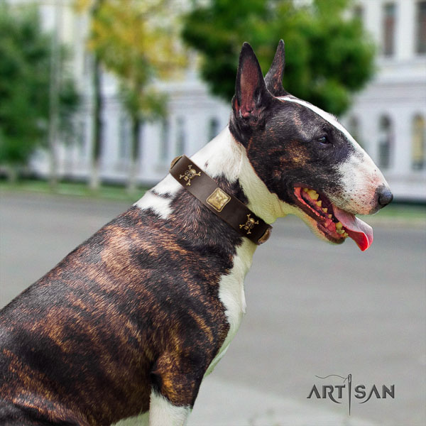 Bull Terrier significant genuine leather dog collar with adornments