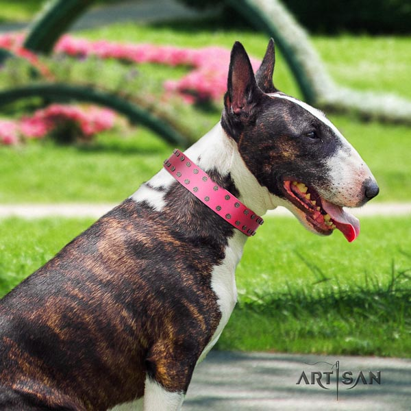 Bull Terrier fancy walking dog collar of trendy natural leather