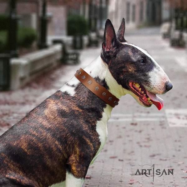 Bull Terrier daily walking dog collar of top notch quality natural leather