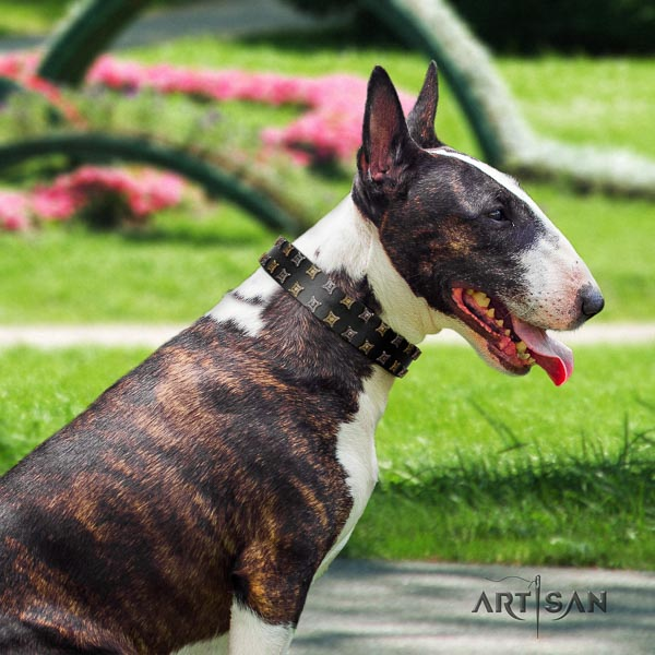 Bull Terrier handmade full grain leather dog collar with adornments