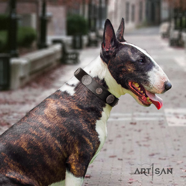Bull Terrier walking dog collar of stylish natural leather