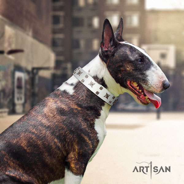 Bull Terrier handy use dog collar of trendy natural leather