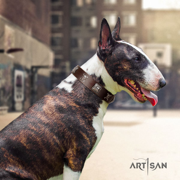 Bull Terrier comfy wearing dog collar of designer natural leather