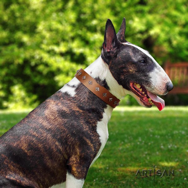 Bull Terrier comfy wearing dog collar of flexible leather