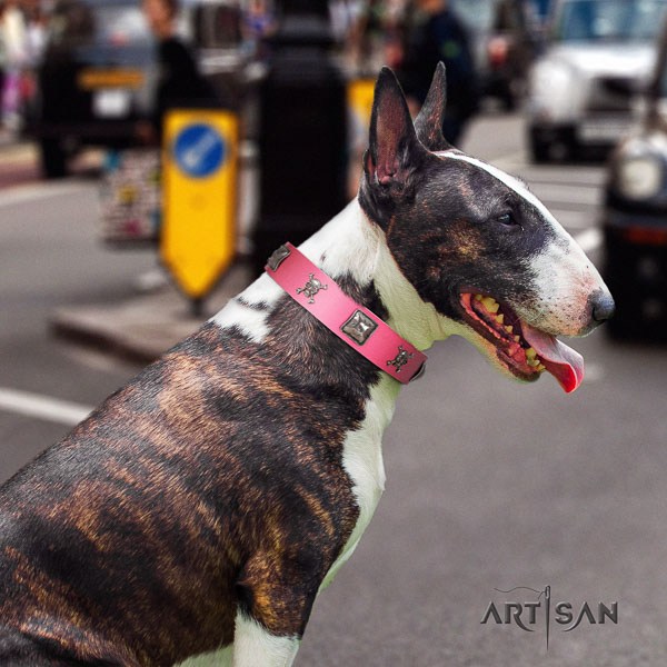 Bull Terrier walking dog collar of trendy leather