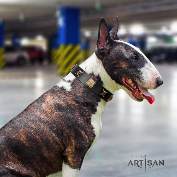Bull Terrier amazing full grain leather dog collar with studs