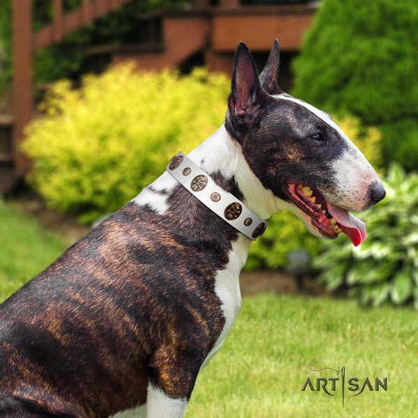 Bull Terrier extraordinary genuine leather dog collar with adornments