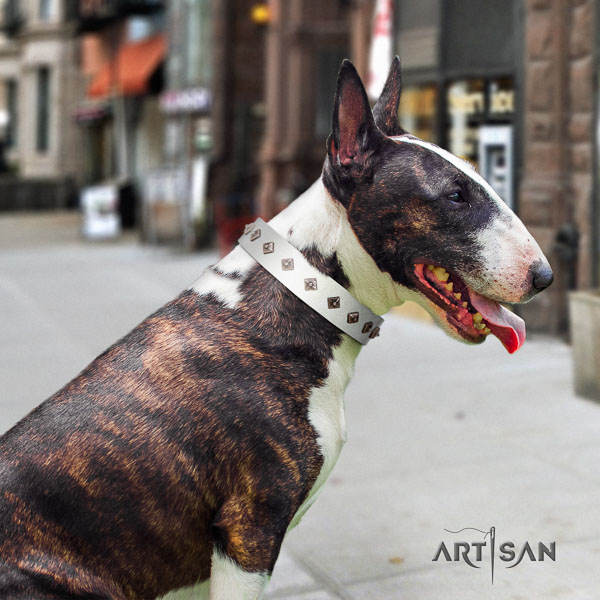 Bull Terrier walking dog collar of significant quality leather