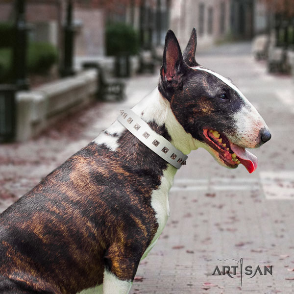 Bull Terrier everyday walking dog collar of exceptional quality natural leather