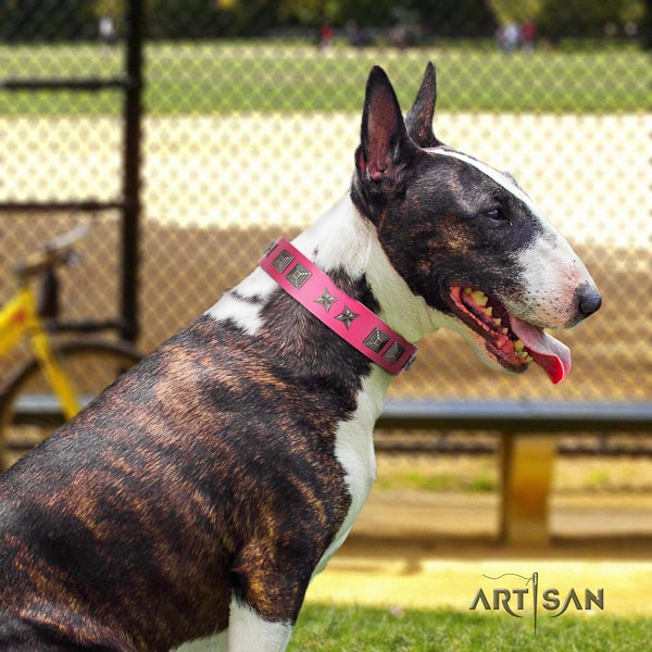 Bull Terrier comfortable wearing dog collar of awesome quality leather