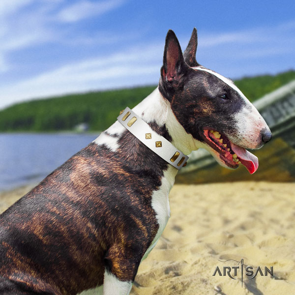 Bull Terrier impressive full grain leather dog collar with adornments