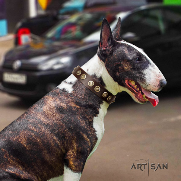 Bull Terrier extraordinary full grain natural leather dog collar with adornments