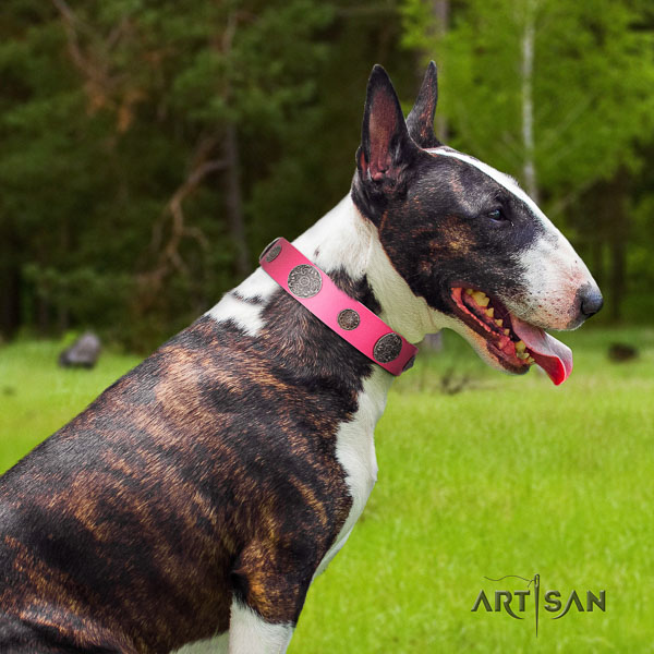 Bull Terrier stylish walking dog collar of fashionable genuine leather