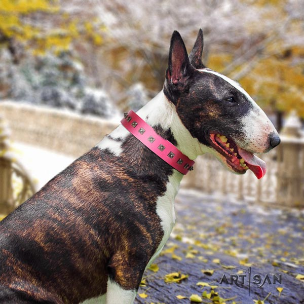 Bull Terrier comfortable wearing dog collar of exceptional quality leather