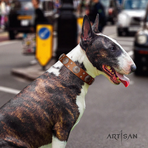 Bull Terrier handy use dog collar of fashionable leather