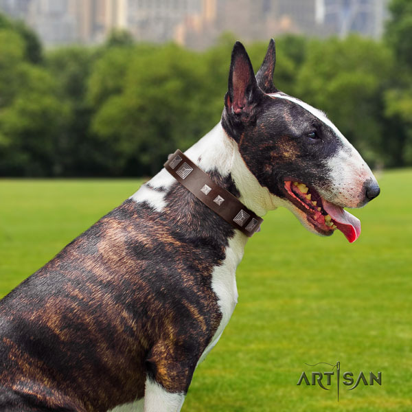 Bull Terrier comfortable wearing dog collar of remarkable quality genuine leather