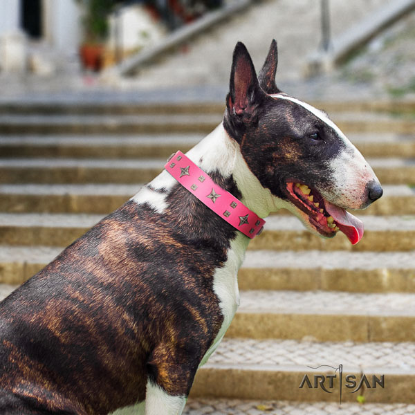 Bull Terrier comfy wearing dog collar of remarkable quality leather