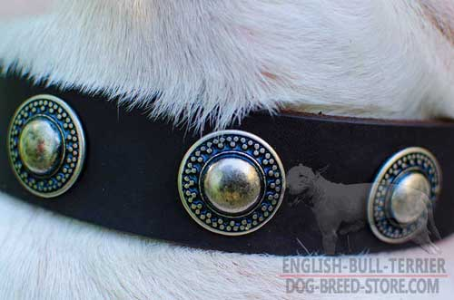 Hand Set Rust Proof Nickel Circles On Walking Leather Dog Collar