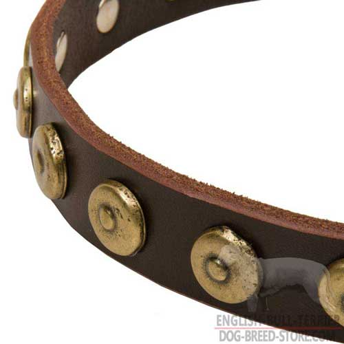 Dotted Brass Circles on Designer Leather Dog Collar for Walking in Style