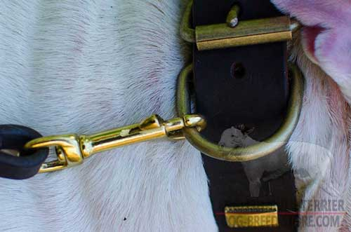 Rustless Brass D-Ring On Leather Dog Collar for Leash Attachment