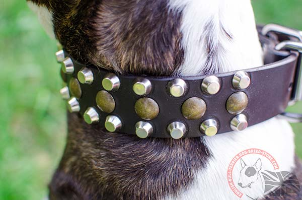 Leather English Bullterrier Collar with Rustless Pyramids