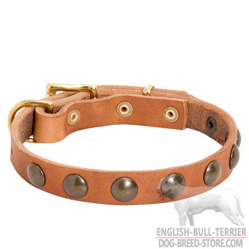 Awesome Studded Leather Dog Collar for Everyday Walking
