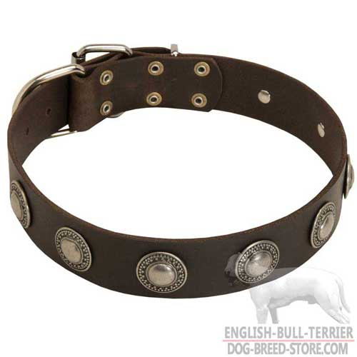 Stylish Leather Bull Terrier Collar For Handling And Training your Dog