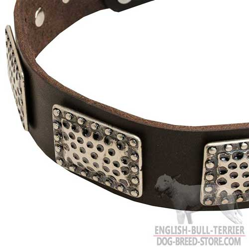 Bull Terrier Dog Collar, Perfect Look