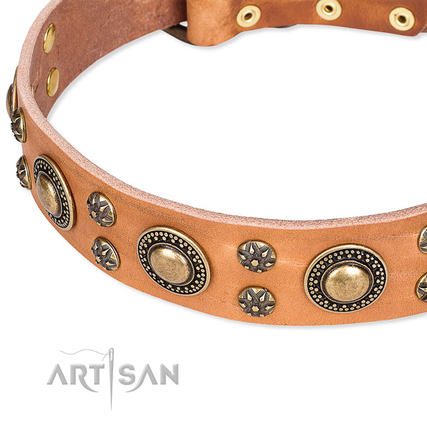 Leather dog collar with remarkable studs