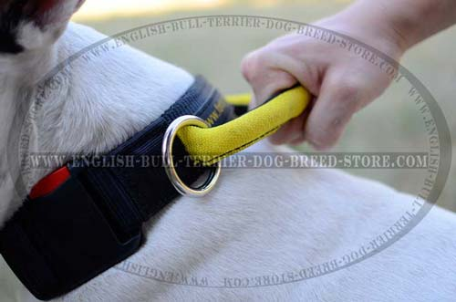Easy Grab Round Handle of Training Nylon Dog Collar for Close Control