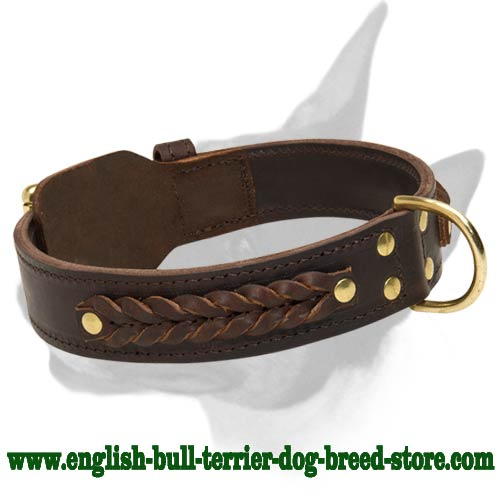 Braided Leather Bull Terrier Collar